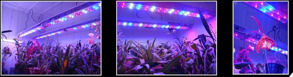 Exemple D 39 Installation Sous Leds Horticole Pour Orchid Es