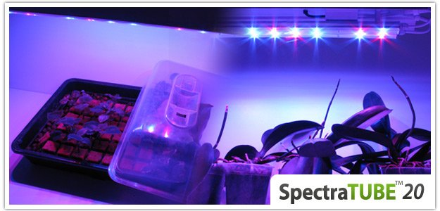 spectratube culture sous led orchidee