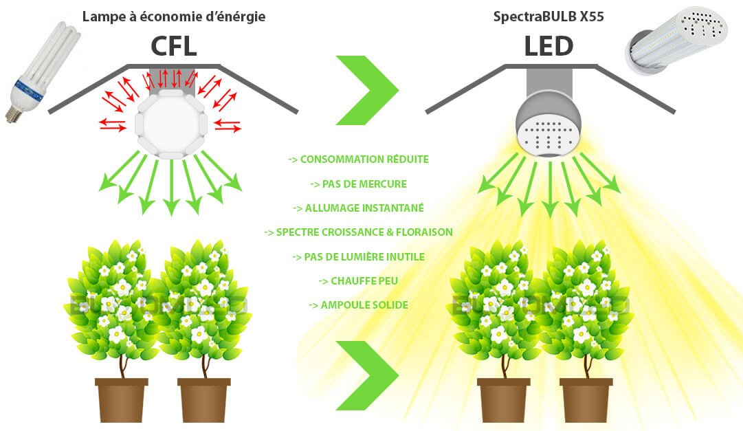 Ampoule horticole LED X55 Bloomled remplacement CFL culture interieur plantes