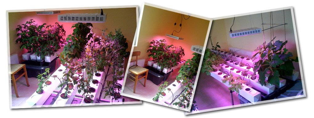 questions sur l 39 clairage horticole leds pour plantes. Black Bedroom Furniture Sets. Home Design Ideas
