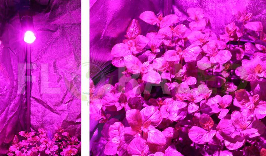 Ampoule horticole led plante menthe