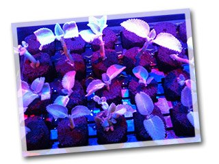 questions sur l 39 clairage horticole leds pour plantes. Black Bedroom Furniture Sets. Home Design Ideas
