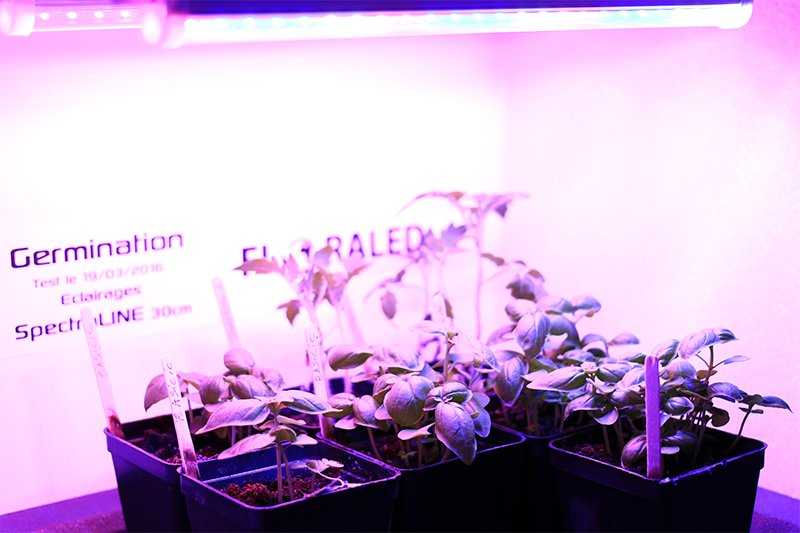 Lampe led horticole pour plantes semis boutures leds neons